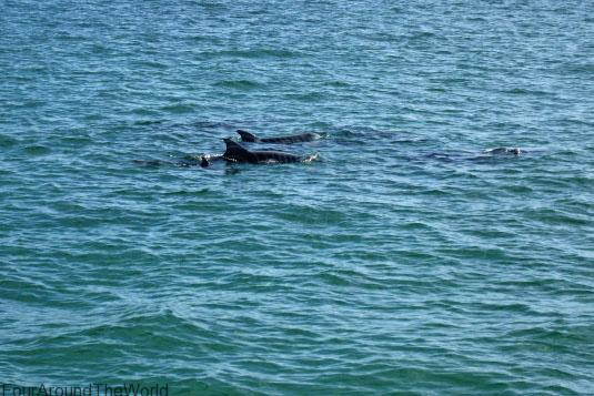 Tangalooma Dolphins cruise - Tangalooma day trip