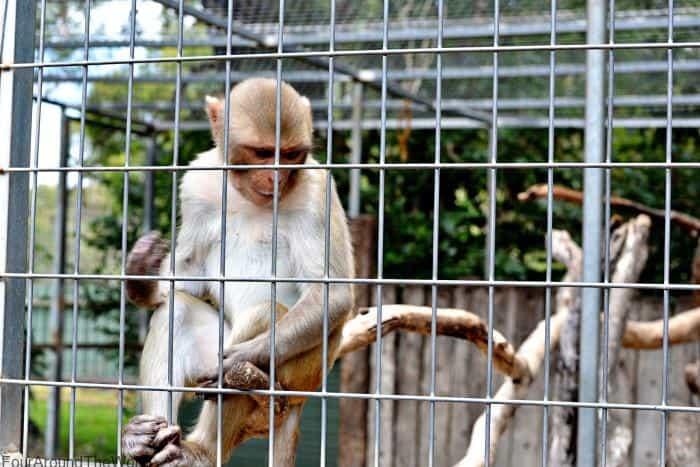 Darling Downs Zoo