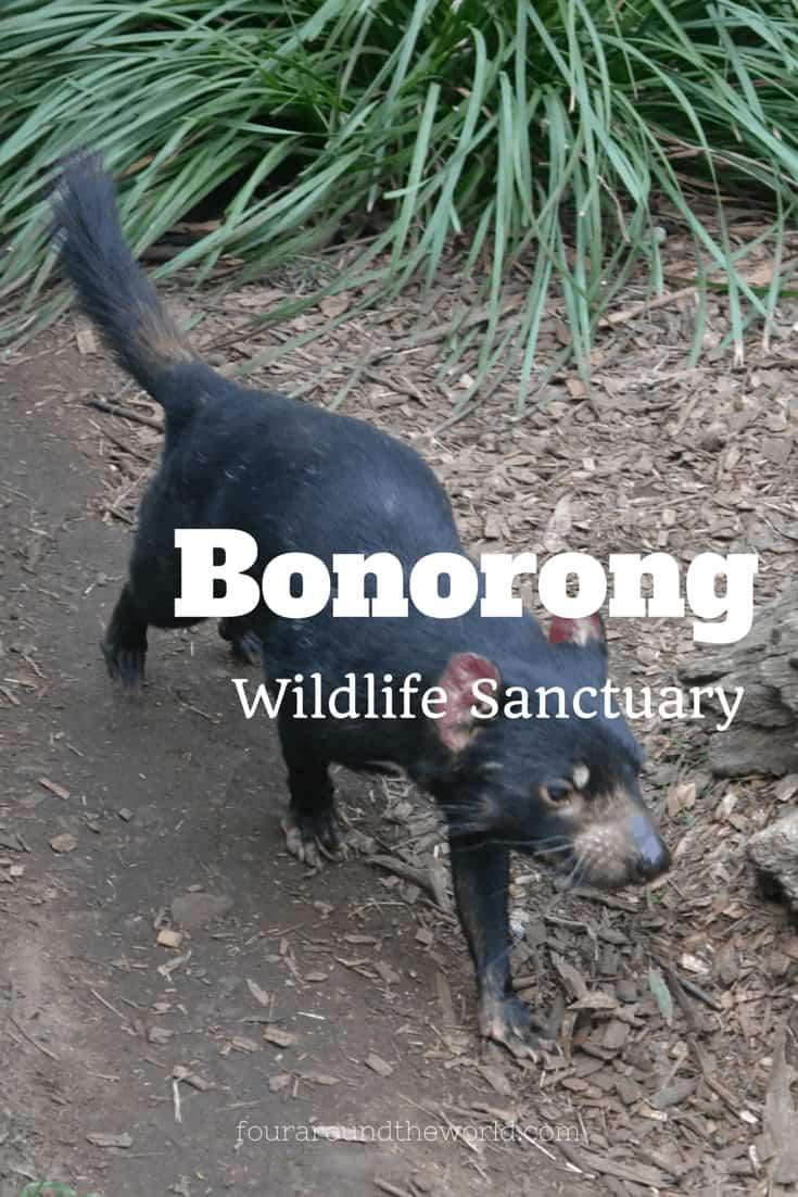 Bonorong Wildlife Sanctuary in Tasmania, Australia