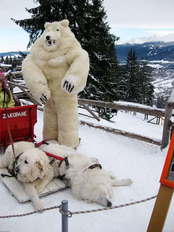 zakopan with kids dog sled ride