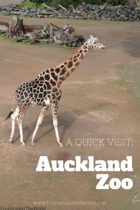 Auckland Zoo in 2 hours - our great experience during our express visit to the zoo.
