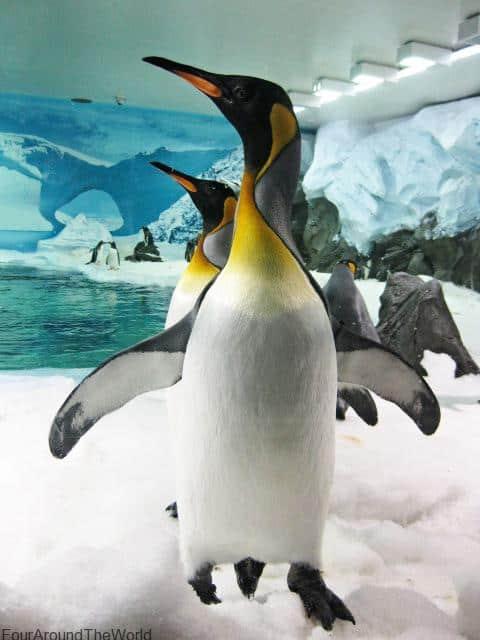 Seaworld Gold Coast penguins