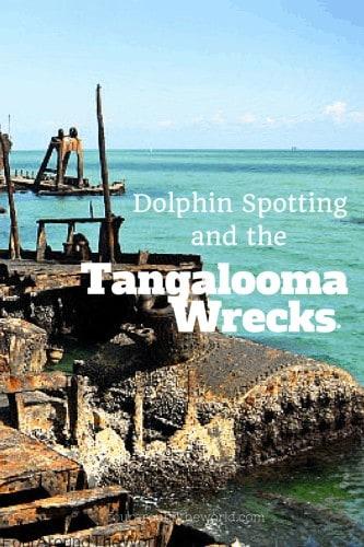 Dolphin Spotting & the Tangalooma Wrecks
