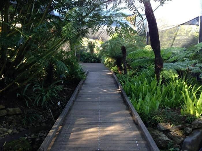 Mt Coot-tha Botanic Gardens