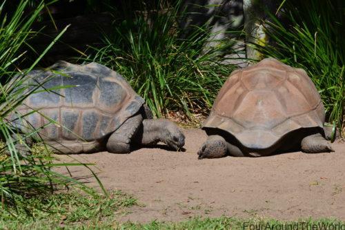 Australia Zoo with kids