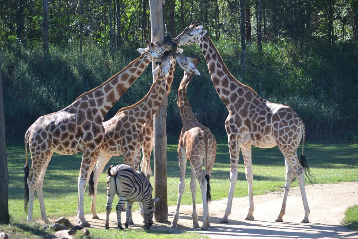 Australia Zoo with young children