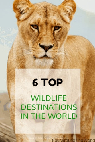 6 top wildlife destinations in the world