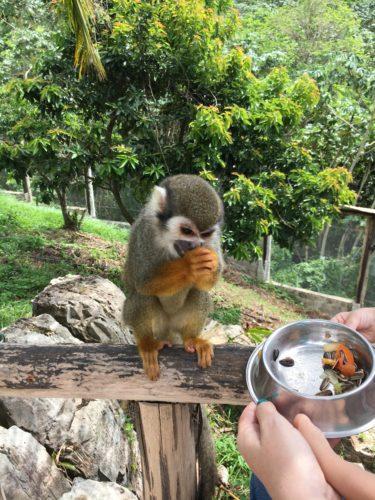 Monkeyland Punta Cana - Monkey World Punta Cana