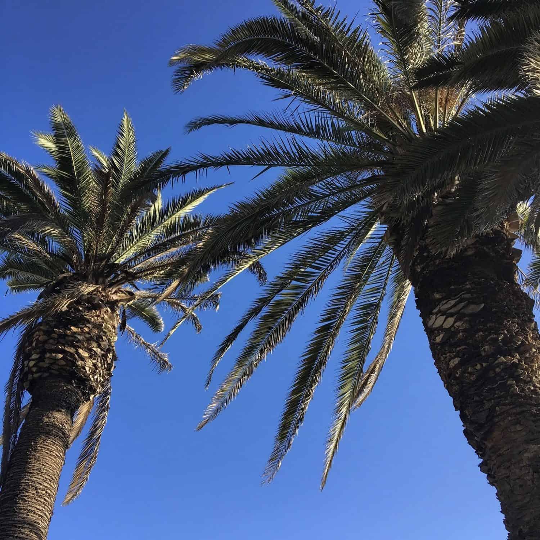 Anaheim City Guide palm trees