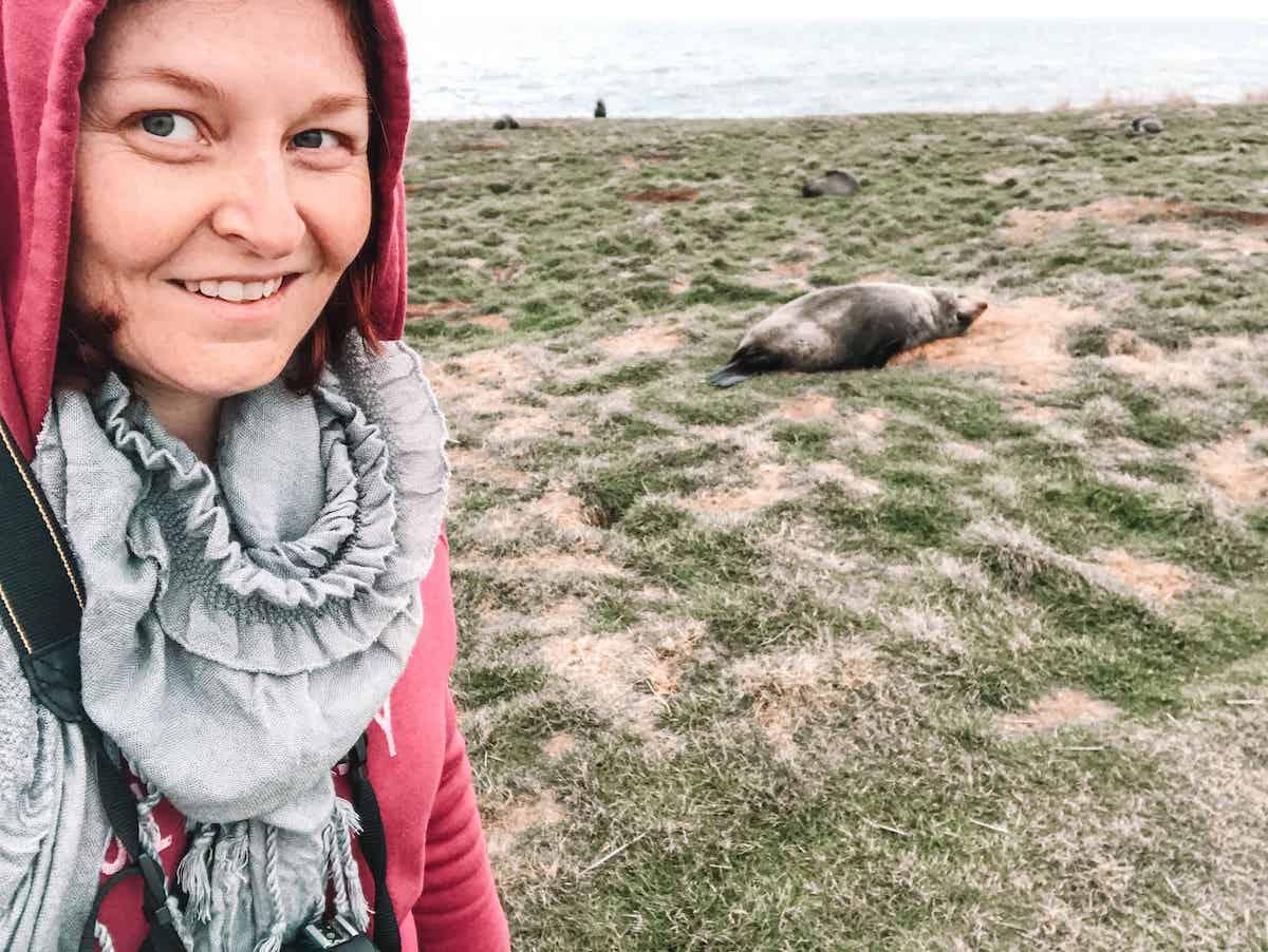 fur seal at katiki point