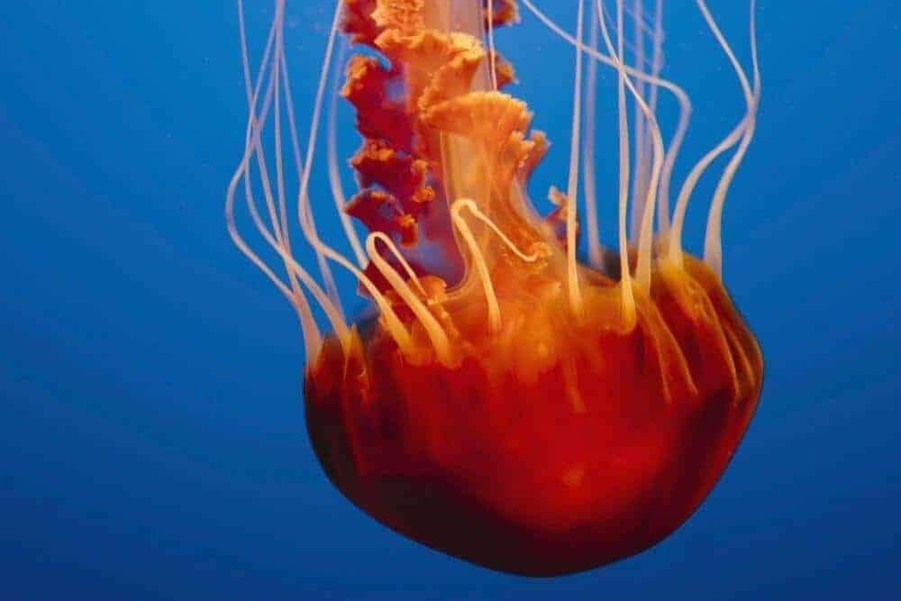 Jellyfish cam in aquarium armchair travel idea