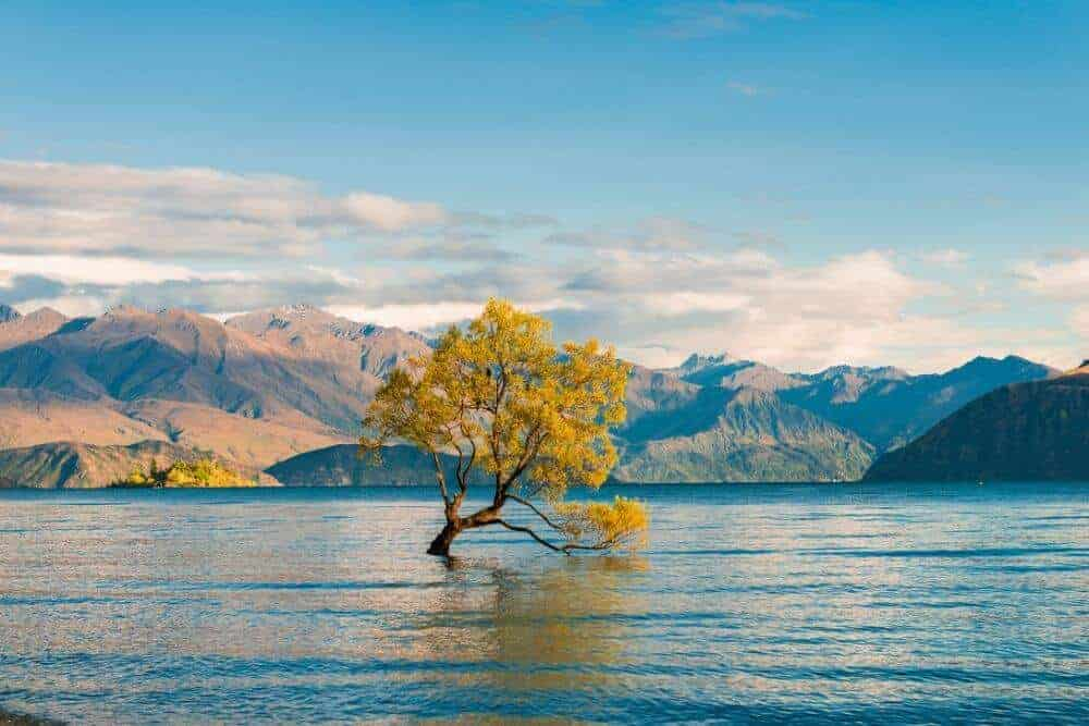 That wanaka tree top things to do