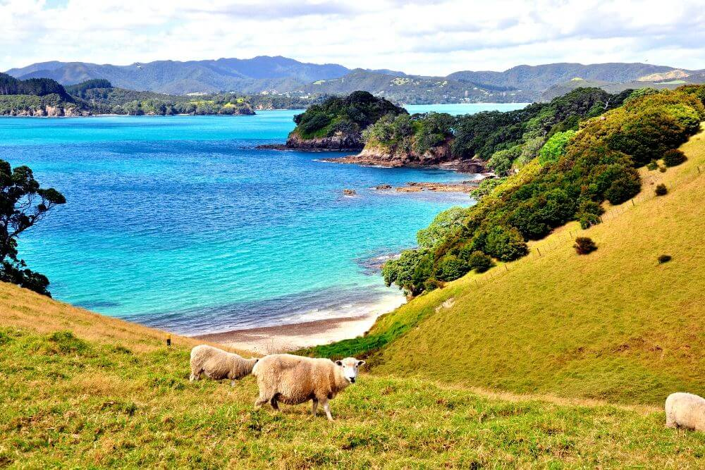 Bay of Islands New Zealand north island