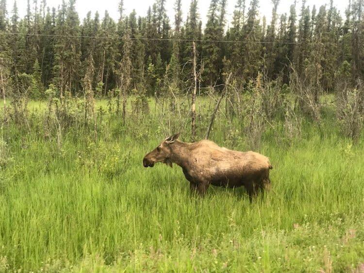 wildlife in seward alaska
