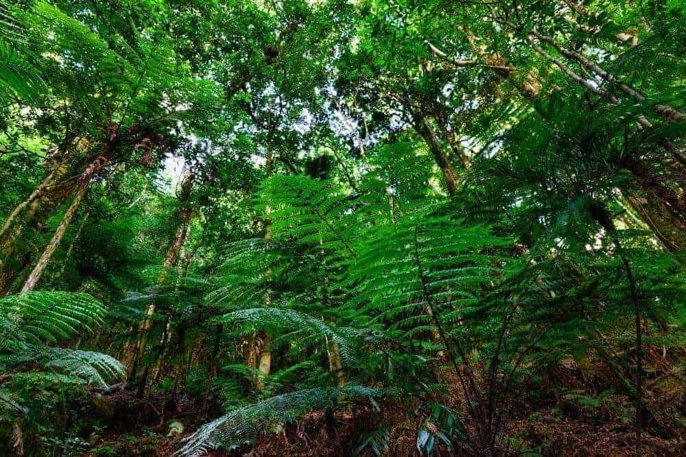 Lamington National Park Rainforest