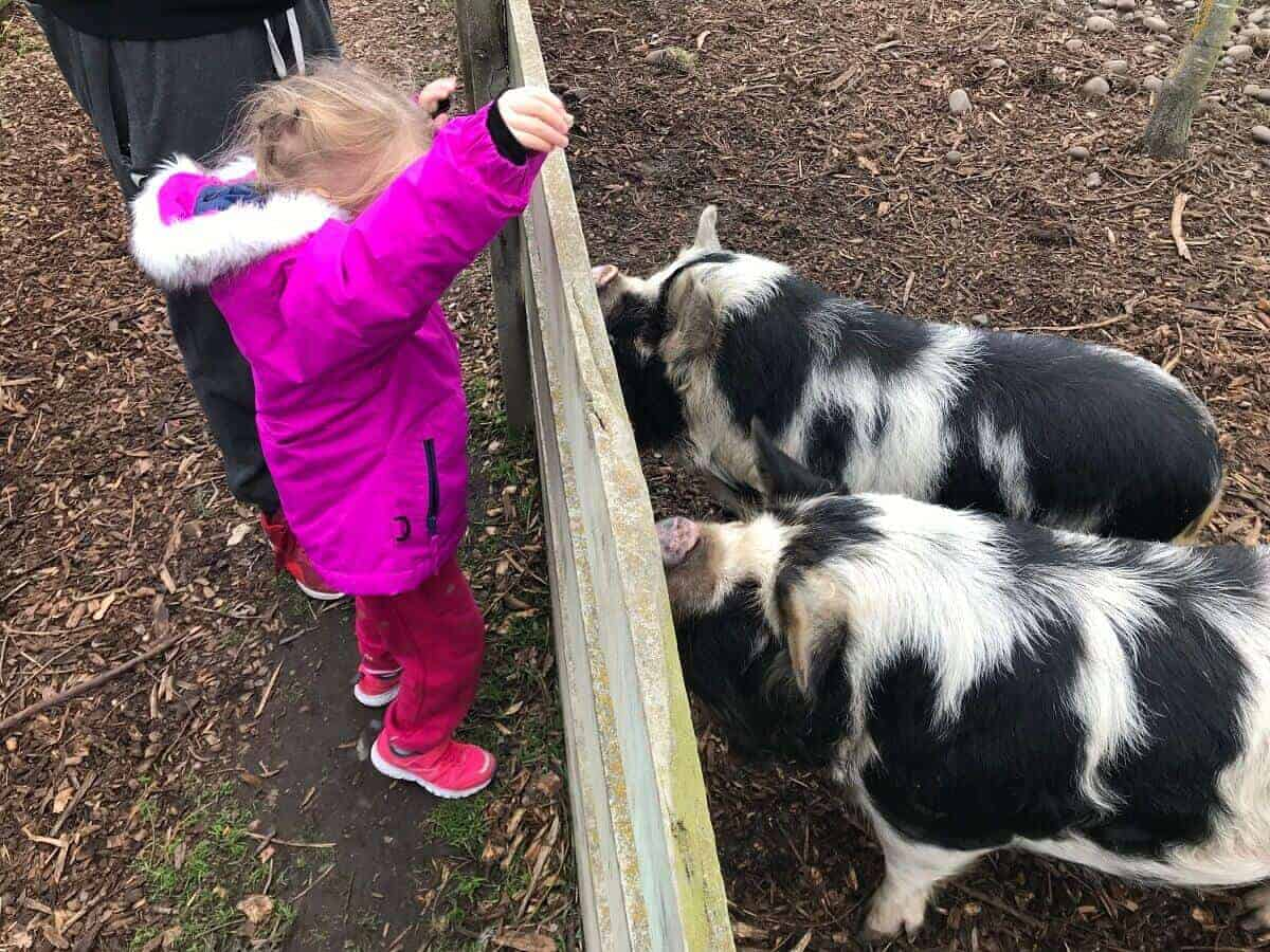 Willowbank wildlife reserve christchurch with kids