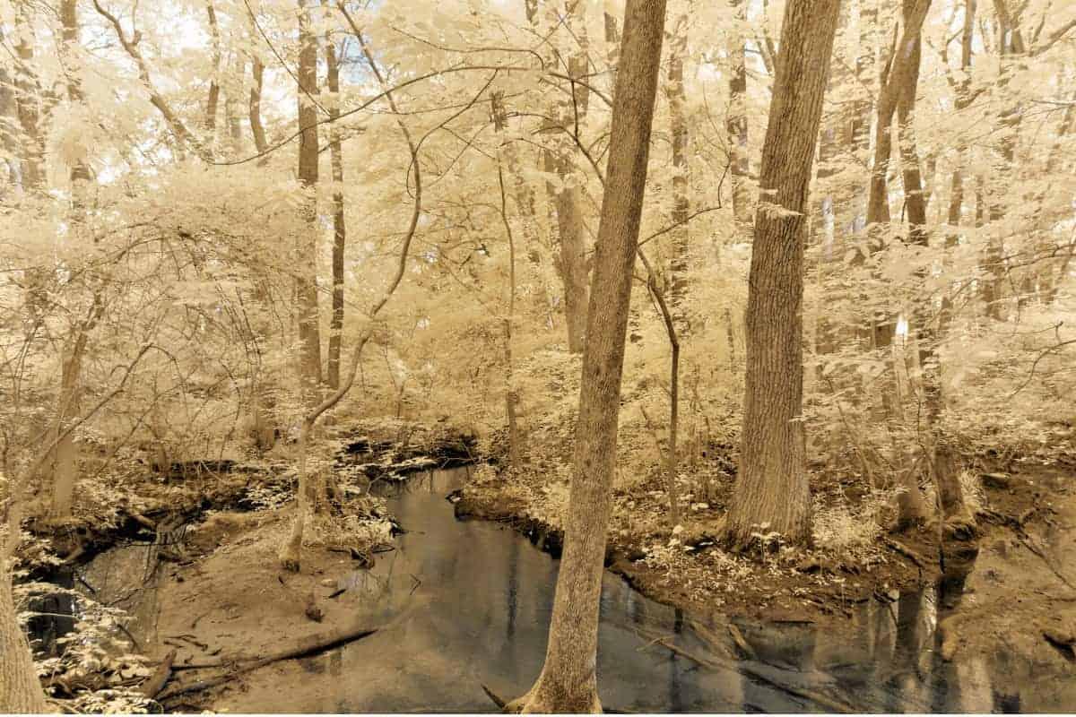 Pemberton forest