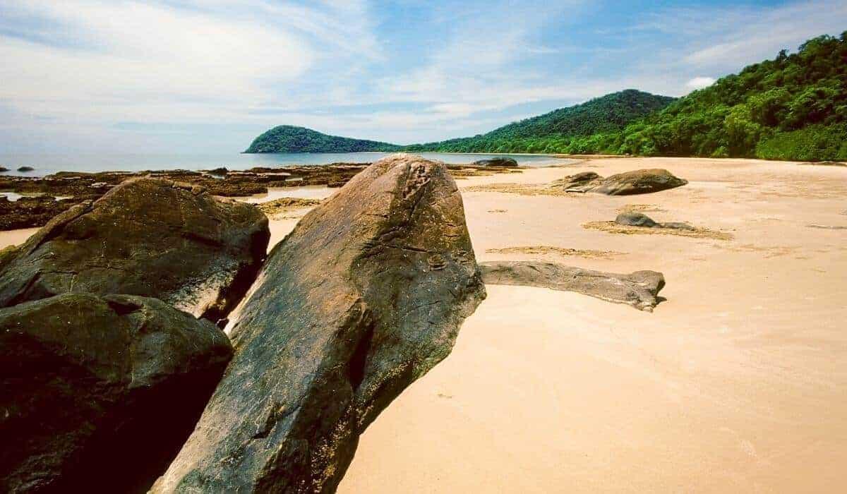 cape tribulation beach meets rainforest