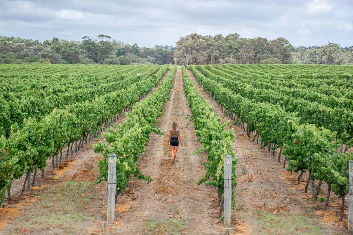 Margaret River vineyard winery