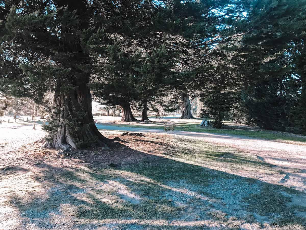 Cust Domain freedom campsite South Island New Zealand