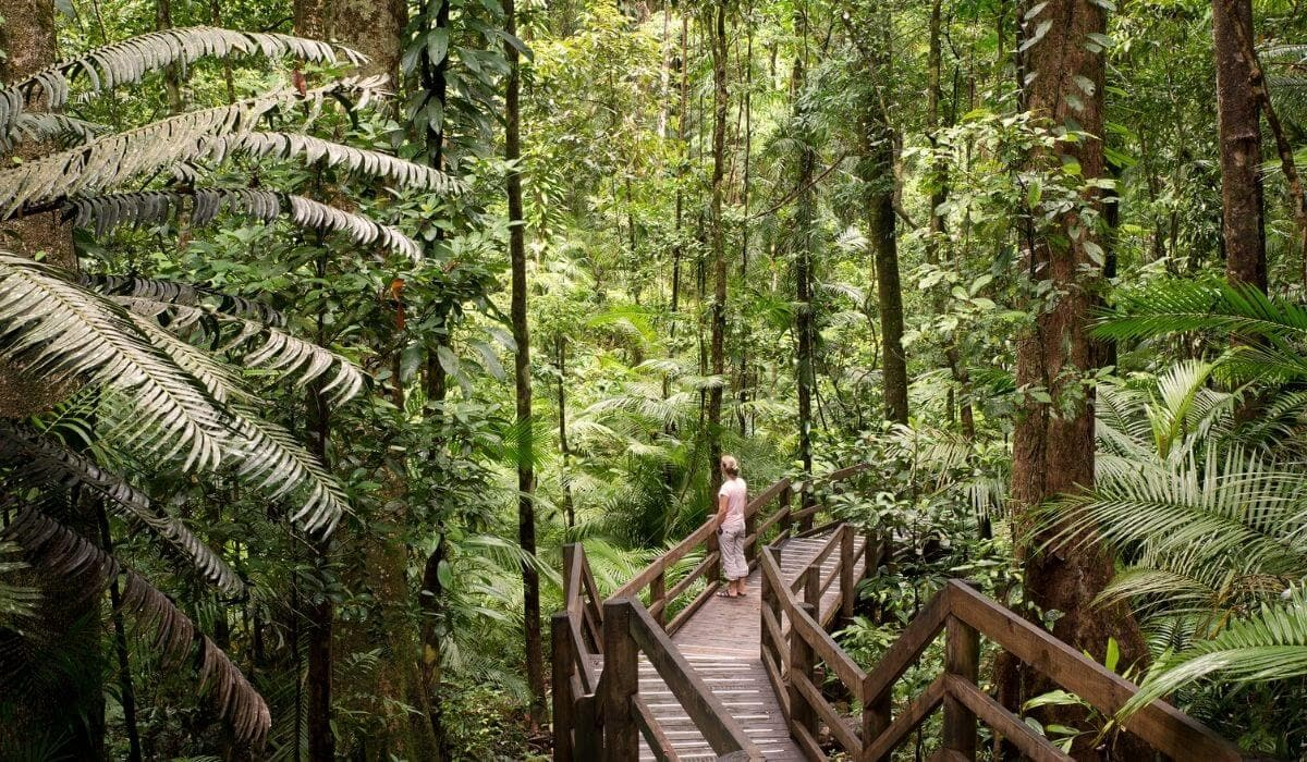 Daintree rainforest things to do in cairns with kids