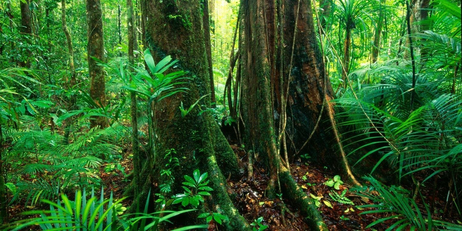 how to get from cairns to daintree rainforest 3