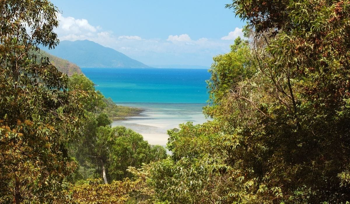 Drive from Cairns to Daintree