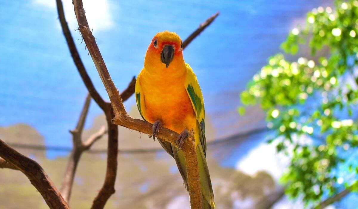 birdworld kuranda parrot