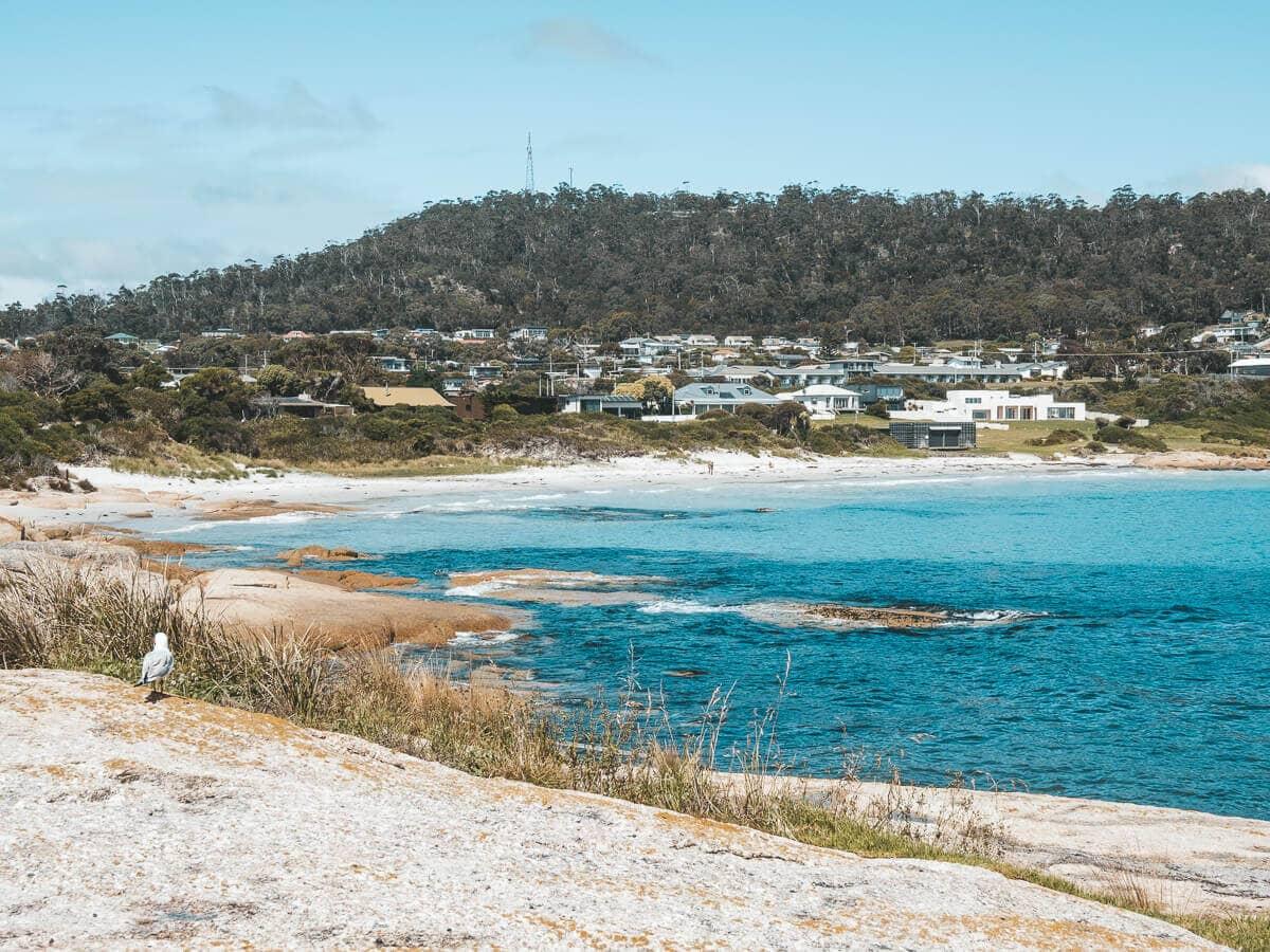 redbill beach bicheno tasmania