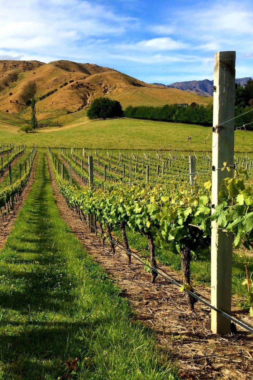 Marlborough region winery