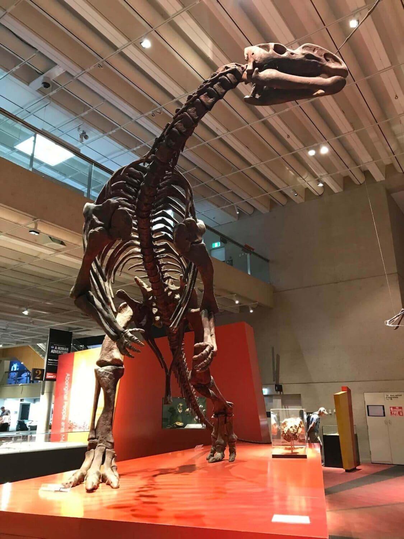 Brisbane Museum dinosaur skeleton