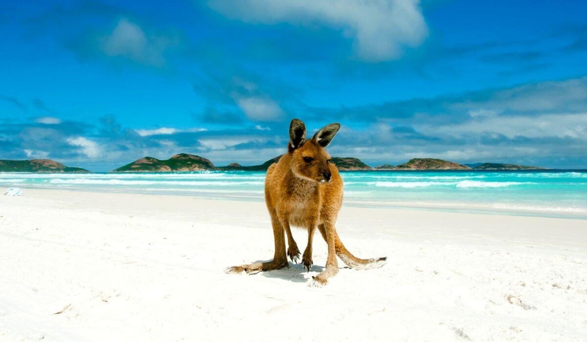 best beaches in western australia - lucky bay kangaroo on beach